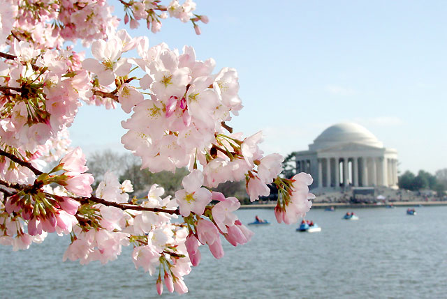 Virtual Vacation in DC