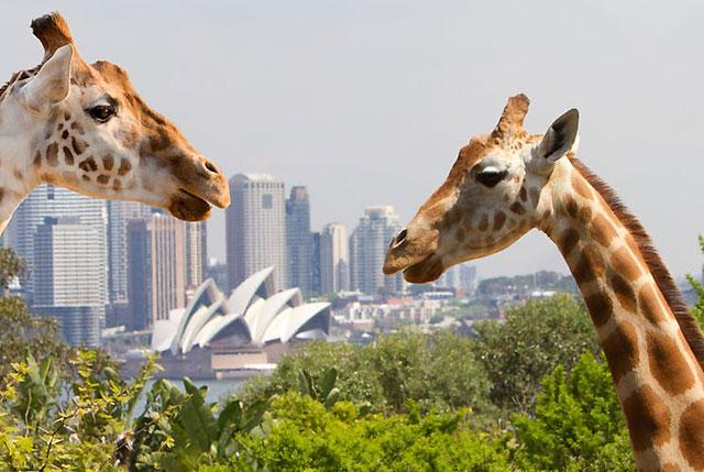 Virtual wildlife with Taronga TV