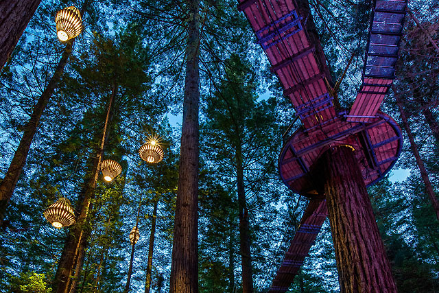 Forest theatre and therapy in Rotorua