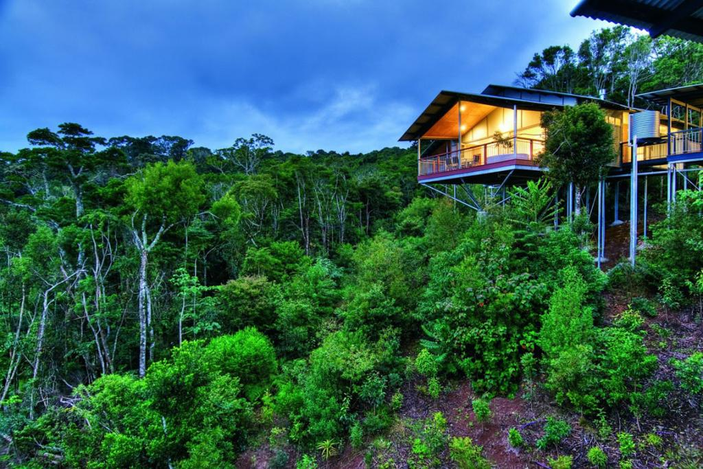 Elevated glory at O'Reilly's Rainforest Retreat
